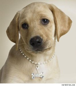 DOG COLLAR BLING
