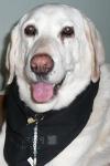 Dog-Collar-Bling
