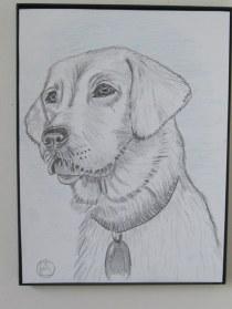 labrador pencil sketches (1)