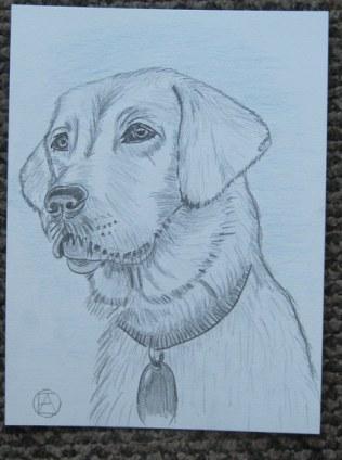 labrador pencil sketches (10)