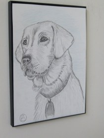 labrador pencil sketches (2)