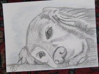 labrador pencil sketches (3)