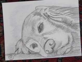 labrador pencil sketches (3)