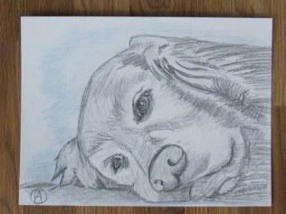labrador pencil sketches (4)
