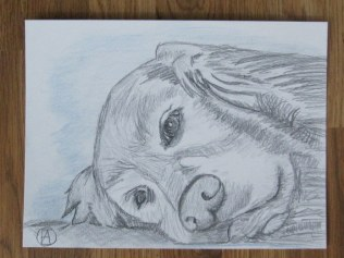 labrador pencil sketches (4)