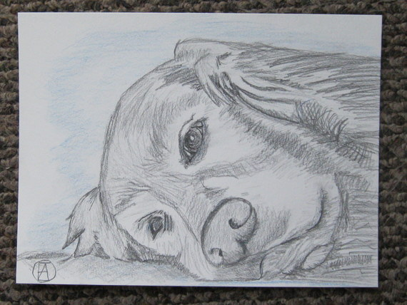 labrador pencil sketches (5)