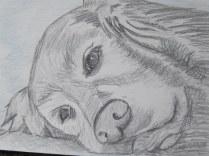 labrador pencil sketches (6)