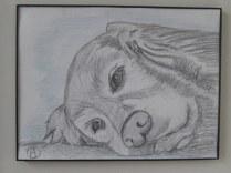 labrador pencil sketches (8)