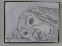 labrador pencil sketches (8)