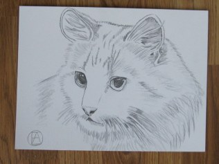 pencil sketch white cat (2)