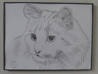 pencil sketch white cat (3)