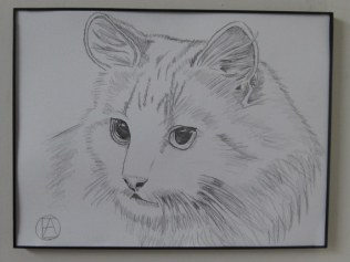 pencil sketch white cat (3)