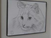 pencil sketch white cat (4)