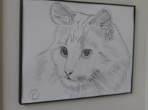 pencil sketch white cat (4)