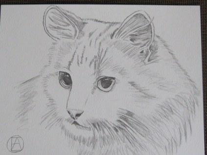 pencil sketch white cat (6)